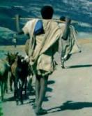 Gembala Ethiopia